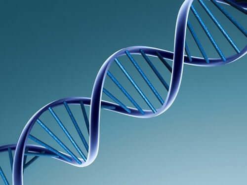 Catena di DNA.
