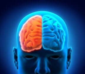 Le aree del cervello e le loro funzioni.