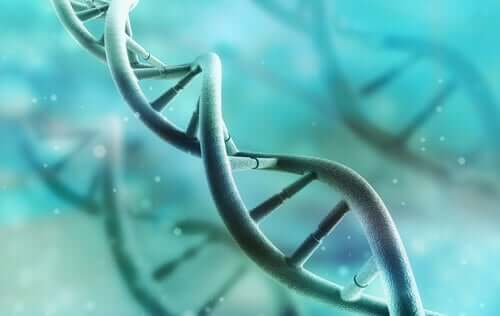 Il DNA: scoperta, struttura e funzioni