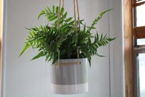 Creare un vaso pensile: vaso con una felce.
