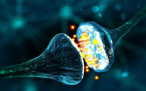 Funzionamento dei neuroni: connessione neurale.