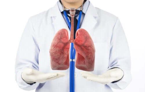Le fasi della respirazione umana in sintesi