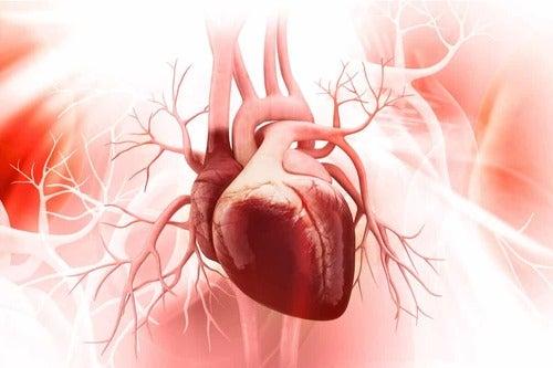Salute cardiovascolare.