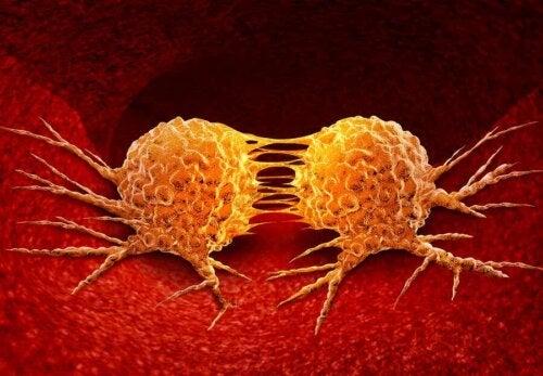 Cellule tumorali.
