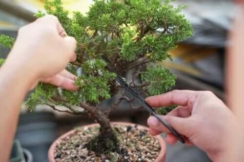 Bonsai: come coltivarli e prendersene cura