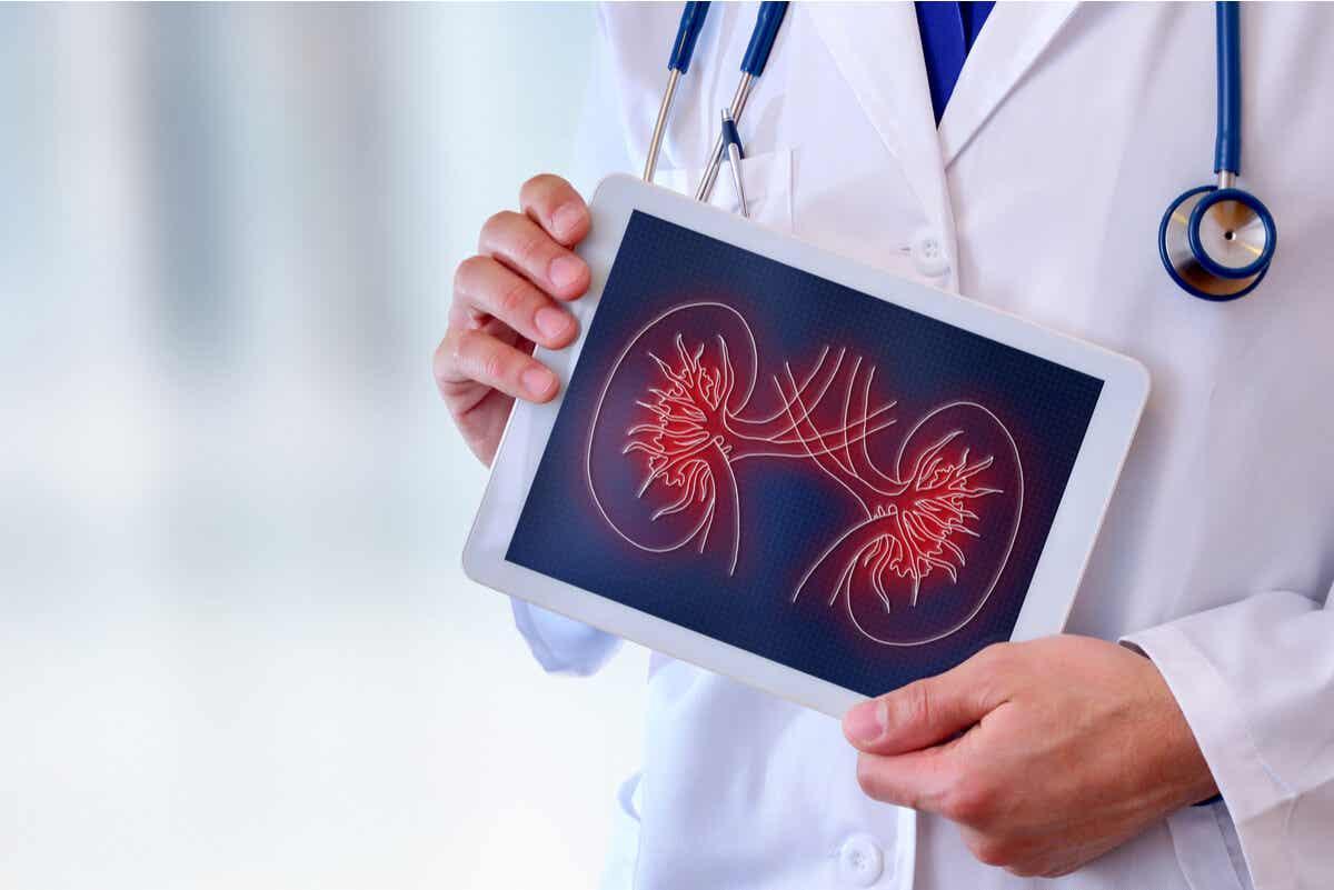 Medico consulta problema ai reni.