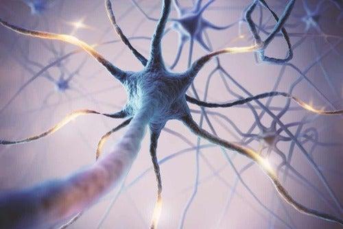 Neuroni su fondo viola.