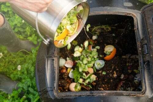 Fare il compostaggio in casa passo dopo passo
