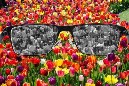 Percezione dei colori alterala tulipani colorati e bianchi e neri.
