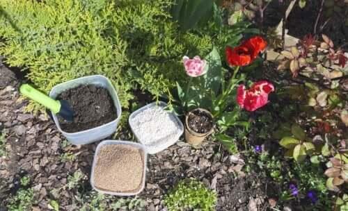 Perlite per le piante: cos'è e come agisce
