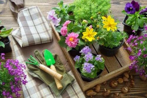 Piante e attrezzi da giardinaggio.
