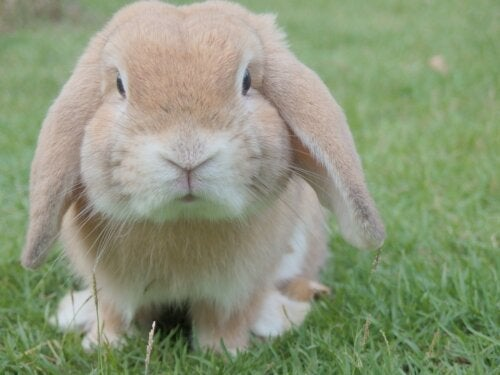 Un coniglio come animale domestico, aspetti da considerare